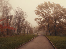 A park in the fog and autumn trees Stock Image