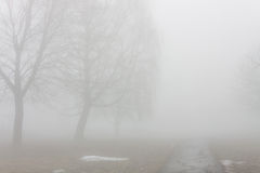 Park in the fog. Landscape park in the fog early spring Royalty Free Stock Photography