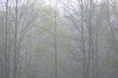 Park at foggy morning. Stock Images