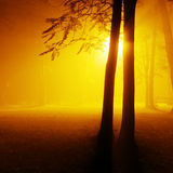 Park on a foggy night Royalty Free Stock Photography