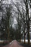 Park footpath in winter with dead trees, mystery spooky morning in winter Royalty Free Stock Images