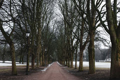 Park footpath in winter with dead trees, mystery spooky morning in winter Royalty Free Stock Photos