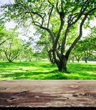 Park forest ecology background Stock Photography