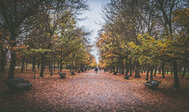 Park forest London  UK Royalty Free Stock Images