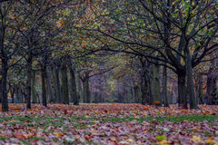 Park forest London  UK Stock Image