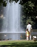 Park fountain ducks. Family in Park in Wiesbaden, Germany Royalty Free Stock Photo