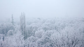 Park with frozen trees Royalty Free Stock Photo