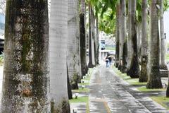 Park går vägen med träd Arkivfoton