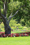 Park garden Royalty Free Stock Images