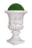 Park/Garten Flowerpot mit unverwüstlicher Anlage stockfoto