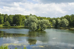 Park in Gatchina Stock Images