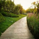 Park golden path. At sunset Royalty Free Stock Photo
