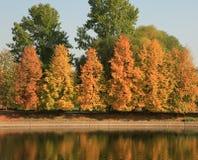 Park in gouden daling stock afbeeldingen