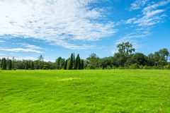 Park grass in the morning Royalty Free Stock Photos