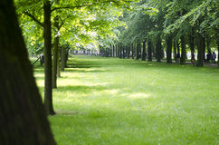 Park with grass and trees Royalty Free Stock Photography