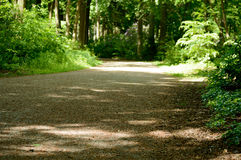 Park gravel road with fresh green colored forest trees and plant. S on the sides Royalty Free Stock Photo