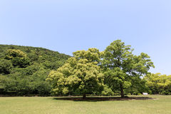Park with green field Royalty Free Stock Photography