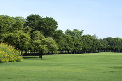 Park with Green Grass and Trees. Bangkok, Thailand Royalty Free Stock Photography