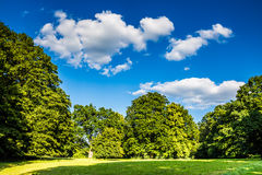 Park with green grass, trees and deep blue sky Stock Photos
