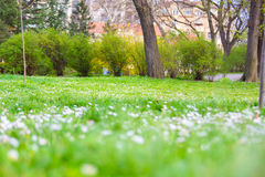 Park with green grass and wild flowers Stock Photography