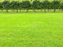 Park with green lawn and linden trees Stock Photo