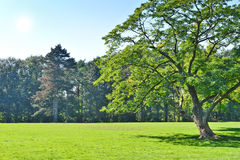 Park with green meadow and forest Stock Photo