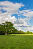 Park with green meadow and forest. Green meadow and blue sky. Summer scene. Stock Photo