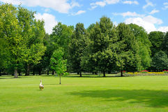Park, green meadow and  sky Royalty Free Stock Photo
