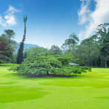 Park, green meadow and  sky Royalty Free Stock Image