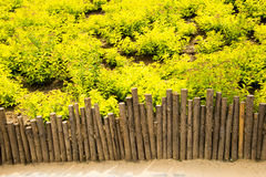 The park green plants and the wooden fence Stock Images