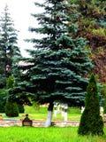 Park. With green trees beautiful park Stock Photos