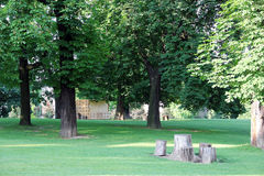 Park with green trees and stumps Royalty Free Stock Images