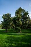 Park Grove Pekings Himmelstempel Lizenzfreie Stockbilder