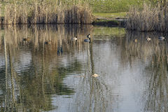 Park of Grugnotorto Italy: lake at winter Stock Photo