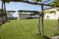 Park of Winery Guado al Tasso, Italy Stock Photography
