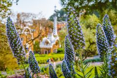 Park Guell. Violet flower in foreground and defocused colorful mosaic building in evening warm light in background. Barcelona, Spain Stock Photography