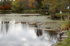 Park in Halifax royalty-vrije stock afbeelding