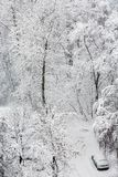 Park during a heavy snow stock photography