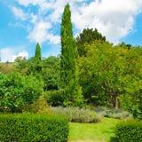 Park, Hecke, grüne Wiese und blauer Himmel lizenzfreies stockfoto