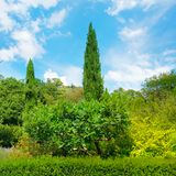 Park, Hecke, grüne Wiese und blauer Himmel lizenzfreie stockfotos