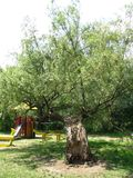 Park in het moeras royalty-vrije stock afbeelding