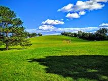 Park-Hügel Lizenzfreie Stockfotos