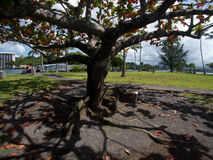 Park in Hilo with view to the bay and trees Royalty Free Stock Photos