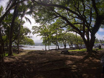 Park in Hilo with view to the bay and trees Royalty Free Stock Image