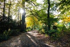 Park i fall Arkivbild