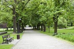 Park i fjäder Royaltyfria Bilder