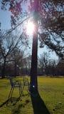 Park idyll. Green nature, sun, trees stock images