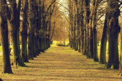 The park II. Tree alley in sunny park Royalty Free Stock Photo