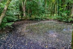Park im Curia; Tamengos; Anadia; Portugal Lizenzfreies Stockfoto