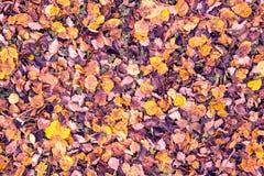 Park im Fall Stockfotos